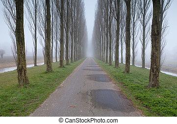 bicicleta, estrada, entre, árvore, filas, em, nevoeiro