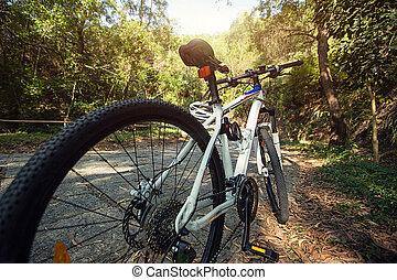 bicicleta montanha, floresta, rastro