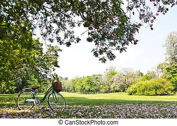 bicicleta, parque