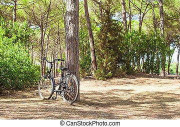 bicicletta, appresso, uno, albero, in, estate, foresta