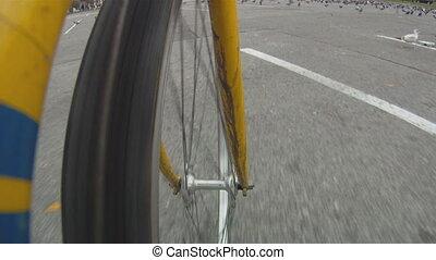 bicicletta, attraverso, pigeons.