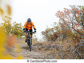 biciklista, elnyomott bicikli, képben látható, a, gyönyörű, ősz, hegy, nyom