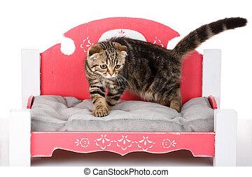 bicolor, cat-bed, schots, vouw, katje, kleine