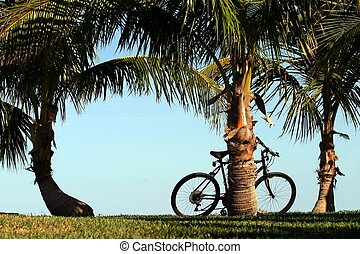 Bicycle and Palms - A bicycle rests against one of three...