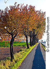 bicycle and pedestrian lane under trees