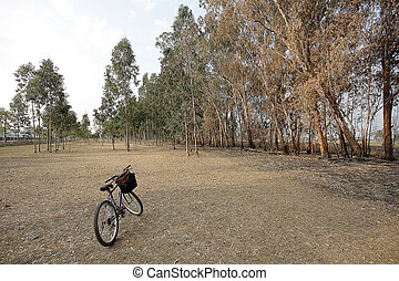 bicycle in a beautiful park