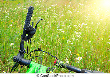 bicycle in camomile summer field