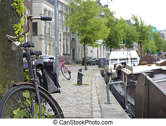 bicycle parked against a tree in Groningen, Netherlands
