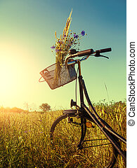 bicycle in landscape - bicycle near a cornfield in summer ...