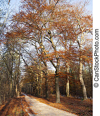 bicycle track in autumn forest with orange colored beech tree in the fall