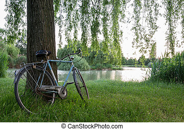 Bicycle under a tree in an italian garden