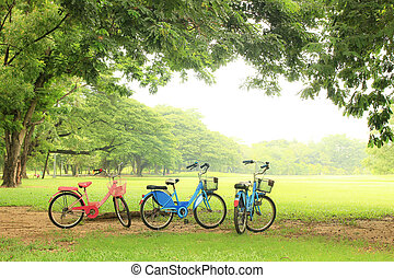 bicycle under big tree in the public park