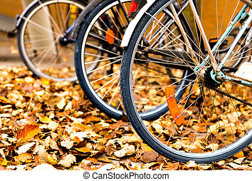 bicycles in autumn leaves