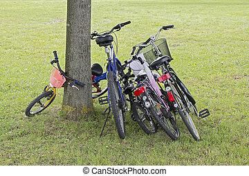 bicycles, inclinar, el, árbol