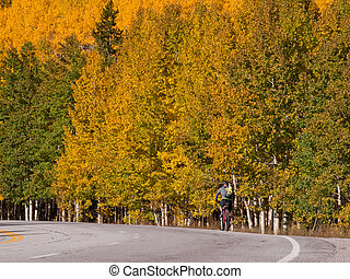 Bicycling in Fall Aspen Trees