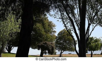 bicyclist in the park - a lone bike rider in a park on a...