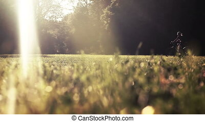 bicyclist, in, zomer, park, onder, morn