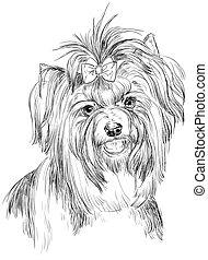 Biewer terrier vector hand drawing portrait