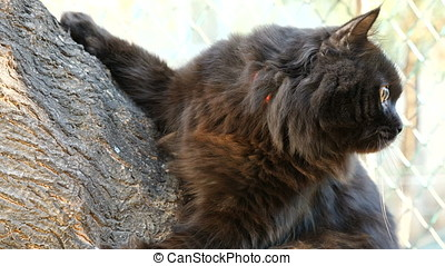 Big adorable black maine coon cat on a tree outside