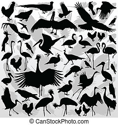 Big and small birds detailed illustration collection...