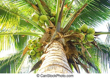 Big and tall coconut trees litter out of many.