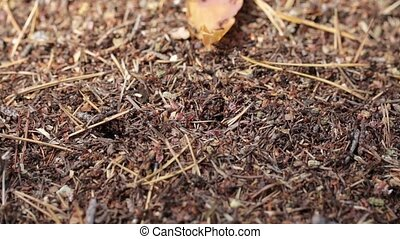 big anthill close-up