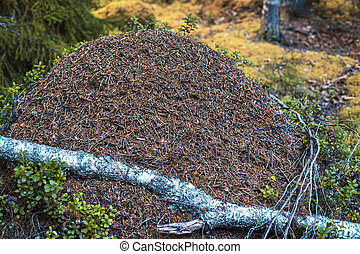 Big anthill