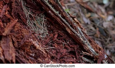 Big anthill. - Big anthill with colony of ants in summer...