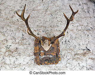 Big antlers on a stone wall of ancient medieval castle