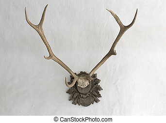 Big antlers on a white wall