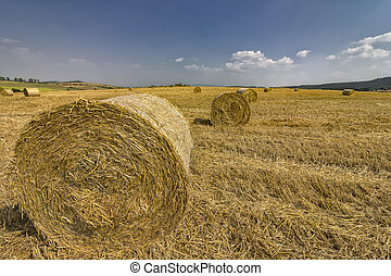 Big bales hay on the field after harvest