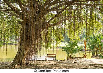 Banyan Tree  - Big Banyan Tree and the chair