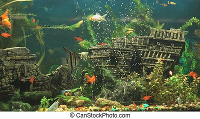 Big beautiful aquarium with small fishes indoors. Close-up