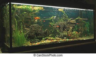 Big beautiful aquarium with small fishes indoors