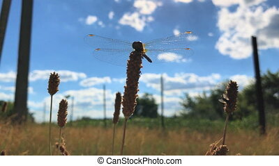 big beautiful Dragonfly sits on a branch on the sky background