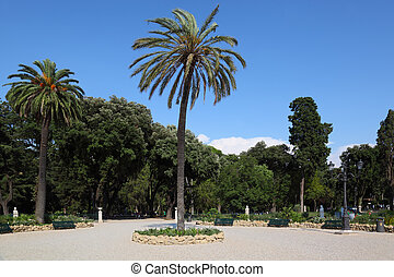 Big beautiful palm trees on Piazzale Napoleone I in Rome, Italy
