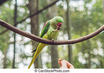 Big beautiful parrot sitting on a tree branch