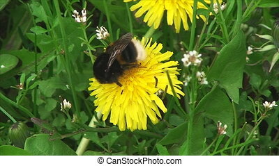 big bee is sitting on a flower
