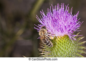 big bee on the flower