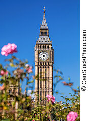 Big Ben with pink roses in London, UK