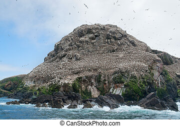 big bird sanctuary at Seven Islands - rocky coastal scenery ...