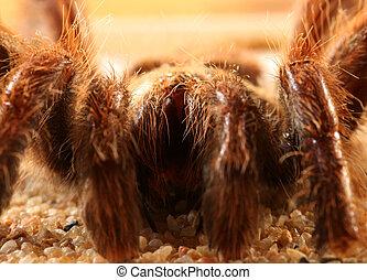 Big bird spider