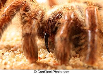 Big bird spider Big bird spider