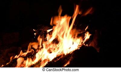 Big blazing campfire. Red flames dancing in the dark night