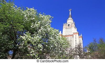 big blossoming apple-tree near Moscow State University in sunny spring day