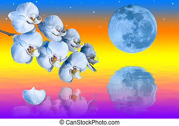 Big blue moon and branch of the orchids flowers