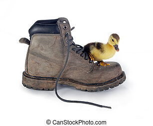 Big boot small duckling