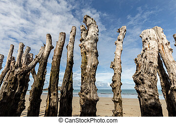 Big breakwater, 3000 trunks to defend the city from the tides, Plage de l'?ventail beach in Saint-Malo, Ille-et-Vilaine, Brittany,