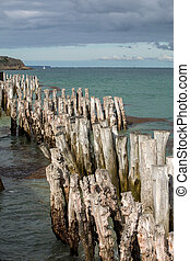 Big breakwater, 3000 trunks to defend the city from the tides, Plage de l'?ventail beach in Saint-Malo, Ille-et-Vilaine, Brittany, France