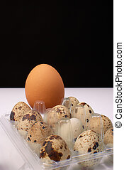 Big brother - Size comparison between a hen and quail eggs